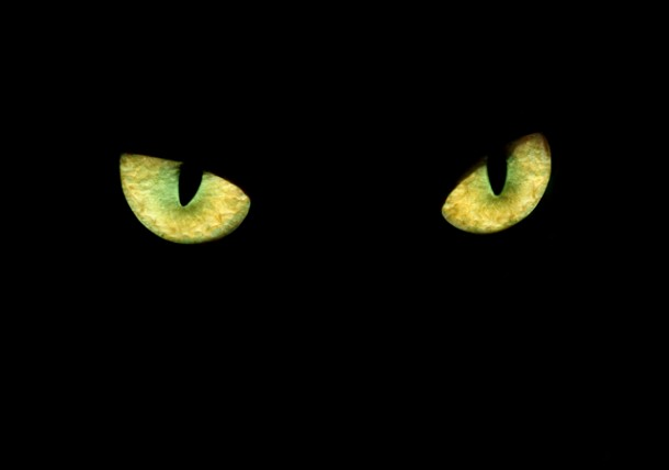 Can Cats See in the Dark? | How Cats Eyes Work TexVetPets