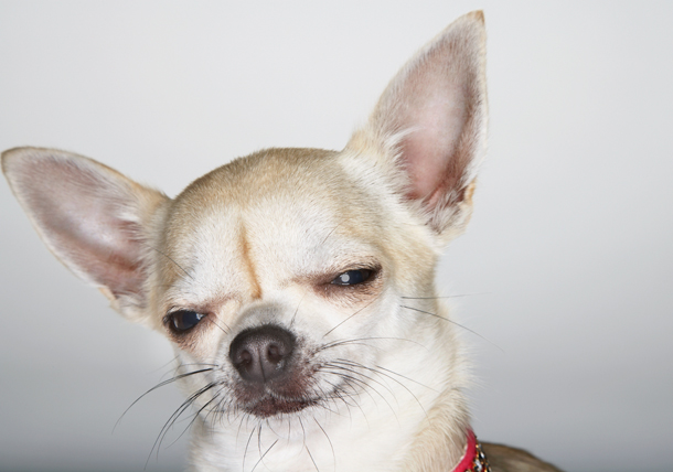 What To Do If Your Dog Eats Weed Pet