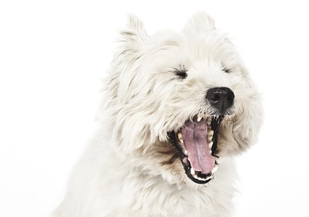Three Common Signs of Oral Cancer   Pet Dental Diseases TexVetPets