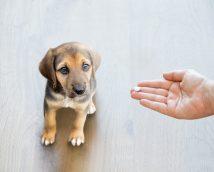 puppy medication